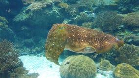 Ocean. Maldives, diving, coral, ocean, snokeling Stock Images