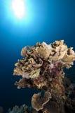 Ocean and mushroom coral Royalty Free Stock Photos