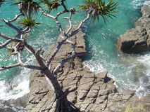 Ocean at Noosa. Overlooking the ocean and pandanus trees at Noosa, Australia stock images