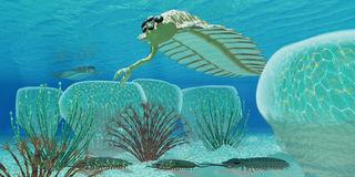 Ocean Opabinia Stock Images