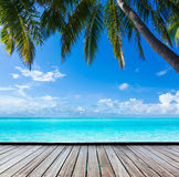 Ocean, palm, paradise Stock Photography