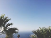 Ocean, palm trees and blue sky Royalty Free Stock Image