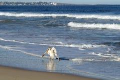 Ocean Park Beach near Punta del Este, Uruguay Stock Images