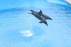 Free OCEAN PARK, HONG KONG-FEBRUARY 17, 2018 - One Of The Key Attract Royalty Free Stock Photo - 111076905