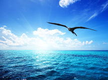 Ocean and perfect sky. One albatross and caribbean sea Royalty Free Stock Photo