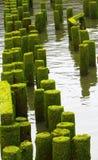 Ocean Pier Ruins left Stock Image