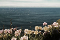 Ocean With Pink Flowers Nearby the Camera on a Sunny Day Stock Photo