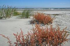 Ocean plaża z roślinami Zdjęcie Royalty Free