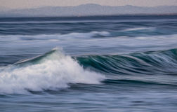 Ocean plama Zdjęcie Stock