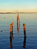 Ocean, poles and mountain. Sunlit poles in the ocean with the mountain in the background Royalty Free Stock Photos