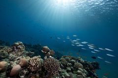 Ocean, reef and fish Royalty Free Stock Photos
