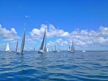 Ocean Regatta Royalty Free Stock Images