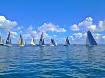 Ocean regatta royalty free stock image