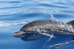 Ocean's Beauty stock images