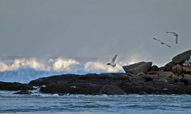 The ocean's rage. Waves crash on the rocks while seagulls escape the spray Stock Photo