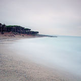 Ocean sand beach bay and pine forest in a bad weather Stock Image