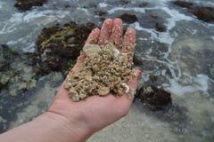 Ocean Stock Photos