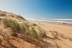 Ocean sand dune Royalty Free Stock Image