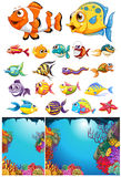 Ocean scene and many sea animals. Illustration Stock Images