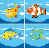 Ocean scene with sea animals underwater Royalty Free Stock Photos