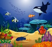Ocean or sea fish, killer whale and stingray. Shoaling and schooling ocean tropical fish behind killer whale, surgeonfish and angelfish, uaru and mesonauta Stock Photos