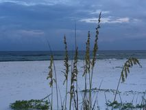 Ocean through sea oats. Florida Gulf Coast Royalty Free Stock Photo