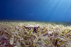 Ocean and seagrass Stock Image