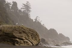 Ocean Seagulls. The Washington coast of the Pacific Ocean royalty free stock photo