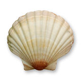Ocean shell Stock Images