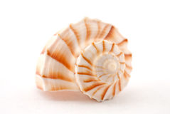 Ocean shell Royalty Free Stock Image