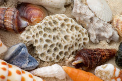 Ocean Shell Background Royalty Free Stock Image