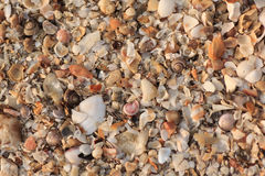 Ocean Shell Background Royalty Free Stock Photos