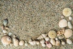 Ocean shell frame background Stock Images