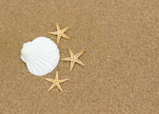 Ocean shell and starfish on the beach Royalty Free Stock Images