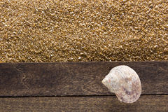 Ocean shell on a wooden board Royalty Free Stock Images
