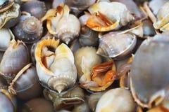 Ocean shellfish on market Stock Image