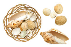Ocean shells  Stock Image