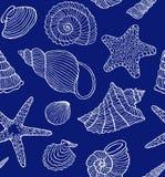 Ocean shells Stock Images