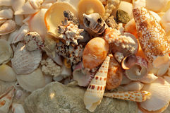 Ocean Shells Background Stock Photography