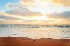 Ocean shore in the morning Stock Image