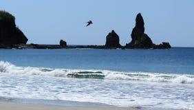 Ocean Spokojny z skałami pelicano fotografia stock
