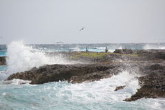 Ocean Spray breaking across the rocks, with birds, wildlife amidst the rocks, Cancun, Mexico Royalty Free Stock Photos
