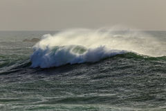 Ocean stormy wave Stock Images