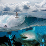 An ocean story with surfers and sharks. Image about the ocean and the surfer on the wave of a cloudy sky over him with the flying seagulls and angry hungry shark stock photography