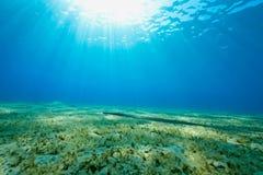Ocean, sun and cornetfish. Taken in the red sea royalty free stock photo
