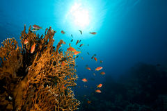 Ocean,sun and fish Royalty Free Stock Photography
