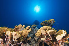 Ocean, sun and fish Royalty Free Stock Photos
