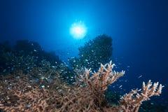 Ocean, sun and fish Stock Photo