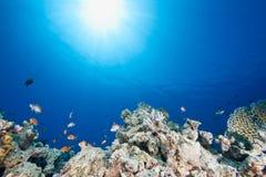 Ocean, sun and fish Stock Photos