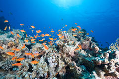 Ocean, sun and fish. Taken in the red sea Stock Photography